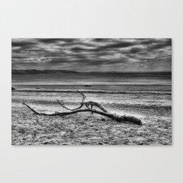 Driftwood 4 mono Canvas Print