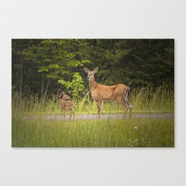 Doe and Fawn along a roadside near Iron Mountain Michigan Canvas Print