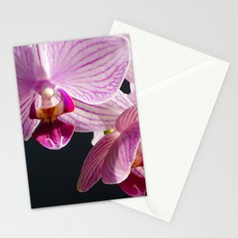 Pink and White Orchids in sunset light close up Stationery Cards