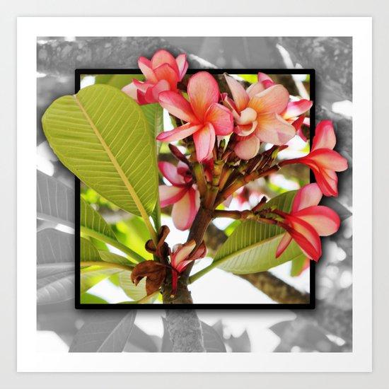 Pink Frangipani  Art Print