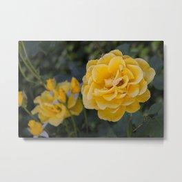 Rose Garden Six (with bonus friend) Metal Print