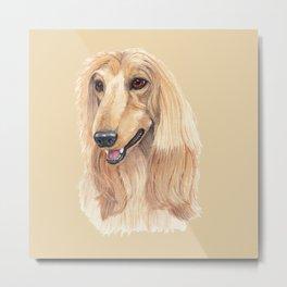 Afghan hound - A Metal Print