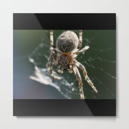 Furry Spider On The Web Metal Print