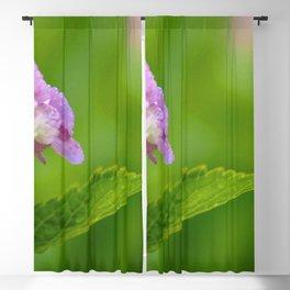Early Morning   #Society6  #buyart  #decor Blackout Curtain