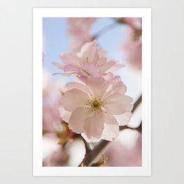 Sping blossom Art Print