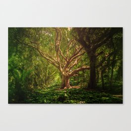 background, forest, trees, digital art, mystical, fantasy, withered tree, shining, lighting, magic, Canvas Print