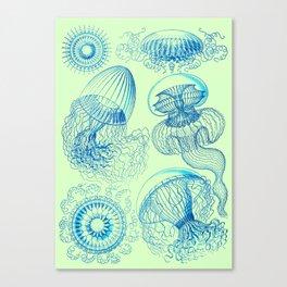 Ernst Haeckel's Leptomedusae Canvas Print