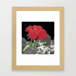 Roses, Color on B/W 2 Framed Art Print