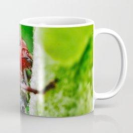 Red Milkweed Beetle Climbing. Macro Photography Coffee Mug