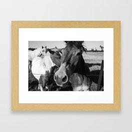 Horses II | Nature-photography-print, Animal-print, Summer Framed Art Print