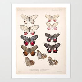 Moths And Butterfly Vintage Scientific Hand Drawn Insect Anatomy Biological Illustration Art Print