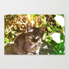 Cat in the shadows Canvas Print