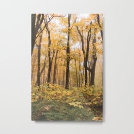 Oberg Mountain Forest in Fall-Minnesota Nature Metal Print
