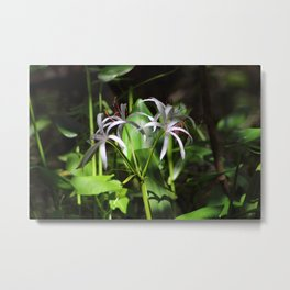 Swamp Lillies of Florida Metal Print