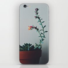 Succulent (1) iPhone & iPod Skin