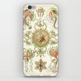 Haeckel jelly fish vintage iPhone Skin
