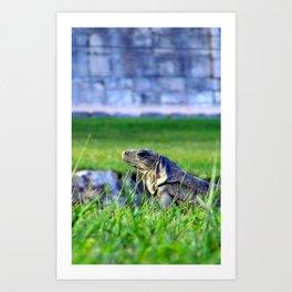 Mayan Iguana Art Print
