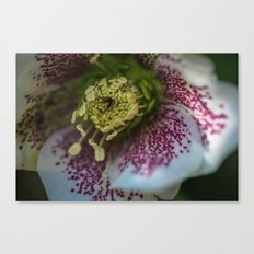 Harvington White Speckled Canvas Print