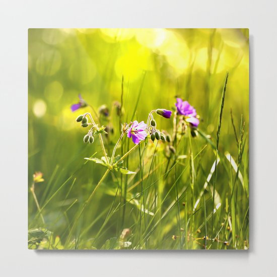 Beautiful meadow flowers - geranium on a sunny day - brilliant bright colors Metal Print