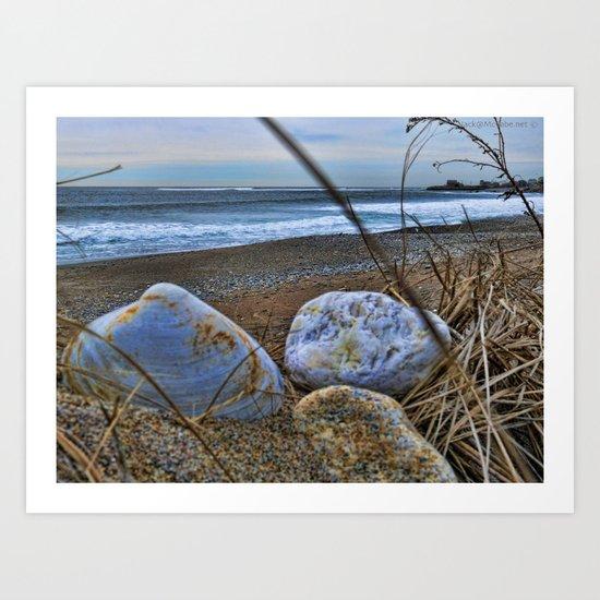 Shells and Beach Stones Art Print