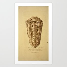 Vintage Print - Arcana or The Museum of Natural History (1811) - Monoculithos Trilobite Art Print