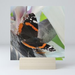 Red Admiral on a White Bird of Paradise Bloom Mini Art Print