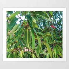 Flowering Gum 0. Leaves. Australia. Art Print