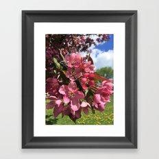 Crab Apple Blossoms Framed Art Print
