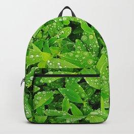Wet grass Backpack