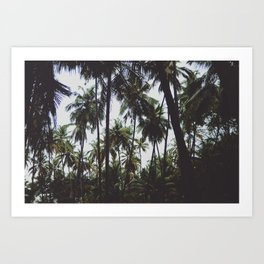 FOREST - PALM - TREES - NATURE - LANDSCAPE - PHOTOGRAPHY Art Print
