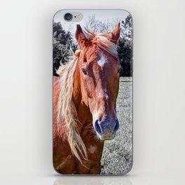 Horse Portrait iPhone Skin