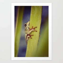 Arum lily frog - Animal Photography #Society6 Art Print
