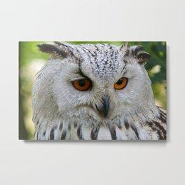 Owl | Chouette Metal Print