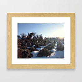 Lavender at Lake Kawagoe Framed Art Print