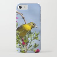 baltimore iPhone & iPod Cases featuring Baltimore Oriole by Christina Rollo