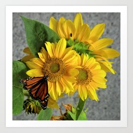 Sunflowers and Monarch Butterfly Art Print