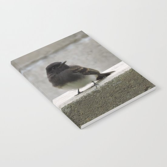 Young Black Phoebes Notebook