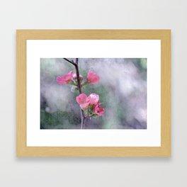 Chaenomeles Japonica Framed Art Print
