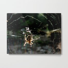 Ragno crociato Metal Print