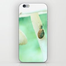 Snail Crossing iPhone & iPod Skin