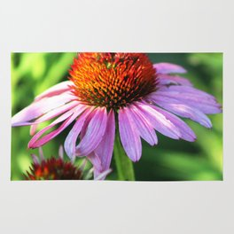 Cone Flower or Echinacea in Horicon Marsh Rug