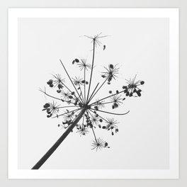 Simply lace Art Print