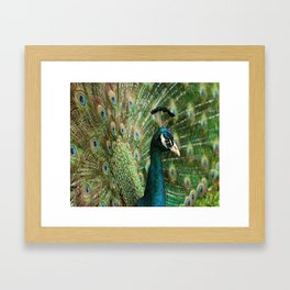 Peacock Portrait Framed Art Print