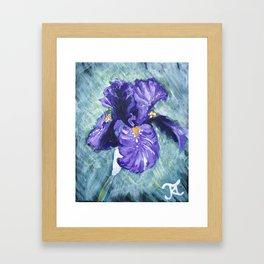 Purple Bearded Iris Framed Art Print