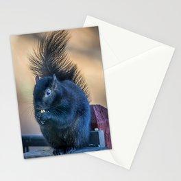 Black Squirrel Stationery Cards