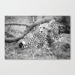 Cheetah, Black and White Canvas Print