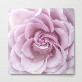 Pink Heart of a rose Roses Flowers Metal Print