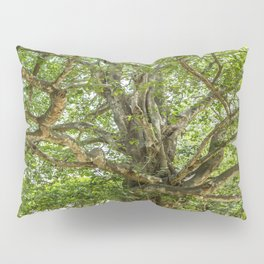 "The ""Magic Tree"", Killing Fields, Cambodia Pillow Sham"