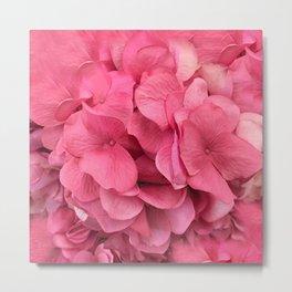 Pink Shabby Chic Hydrangea Flower Prints Metal Print