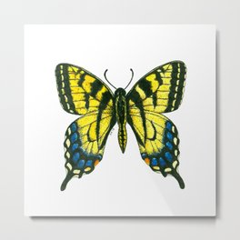 Tiger swallowtail butterfly watercolor and ink Metal Print